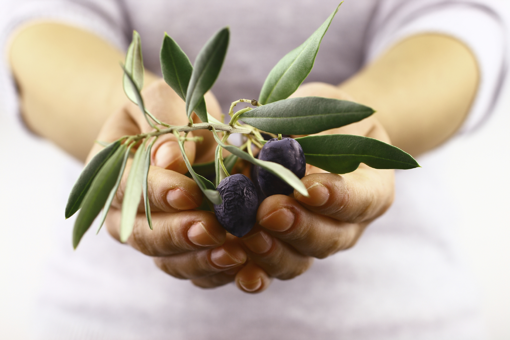 The Humble Olive Is Used From Many Olive Products